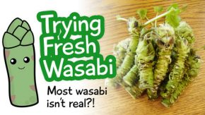 fresh-wasabi-video