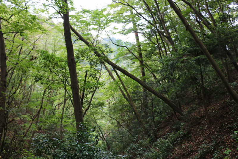 Scenery on Mt Takao
